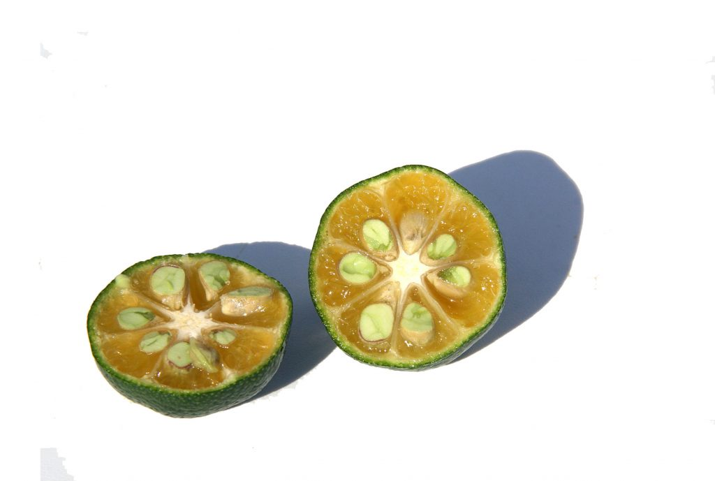 Shikuwasa Nobiletin Citrus of Longevity